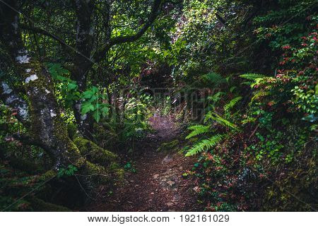 Image of a green and lush forest trail.