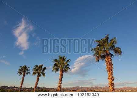 Four Palm Trees and Blue Sky in Nevada