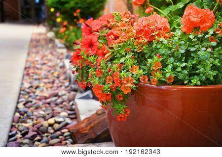 Flower pot full of petunias and geraniums