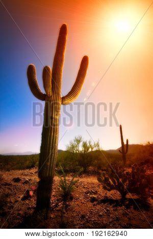 Saguaro Cactus lens flare in Desert Heat