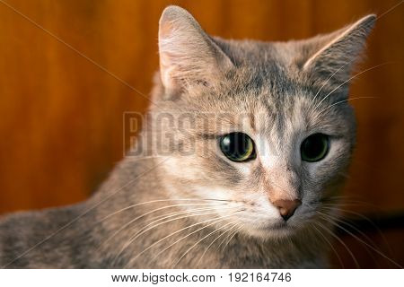A cat is at loss at a wooden background