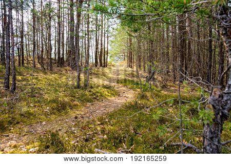 Narrow path through the forest in thuringia saalfeld