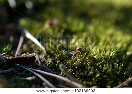 Ants on nature in the forest and green moss