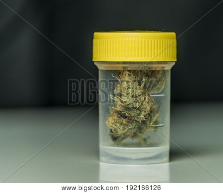 Medical marijuana in transparent and yellow plastic box