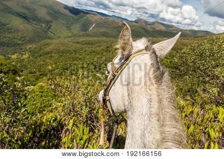 Horse on the top of a mountain in Matutu, state of Minas Gerais, Brazil