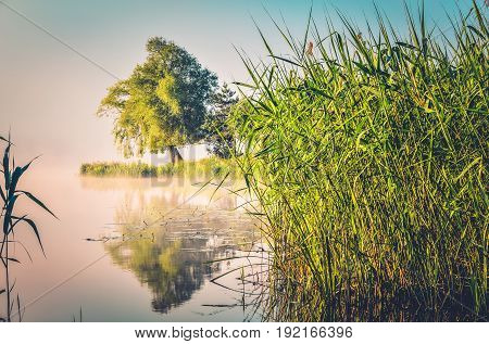 Spring morning landscape. Peninsula with green trees and grass on the lake.