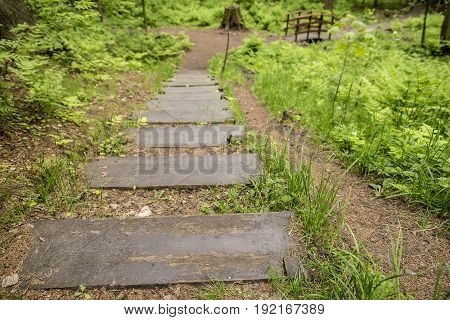 Wooden stairs are wet from the rain and a path leading to a small bridge over a stream in a summer forest park.
