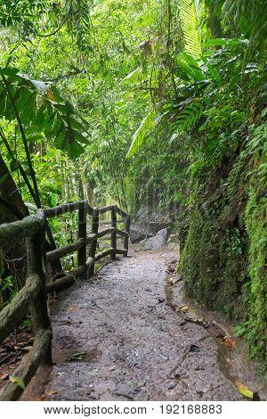 Path in lush rainy rainforest Costa Rica