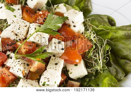 Salad whit Mexican Panela cheese, cherry tomatos, coriander, alfalfa sprouts over lettuce, salt and pepper and a bit of olive oil