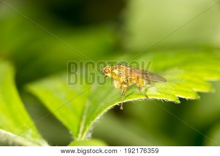 fly in nature. a close-up . A photo