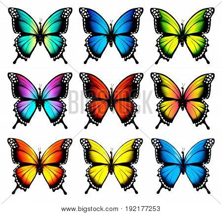 Big collection of Colorful butterflies set. Vector.