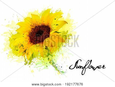 Nature background with yellow sunflower. Vector illustration