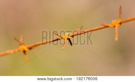 barbed wire on a nature . A photo
