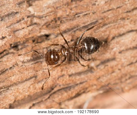 ants on wood. close up . A photo