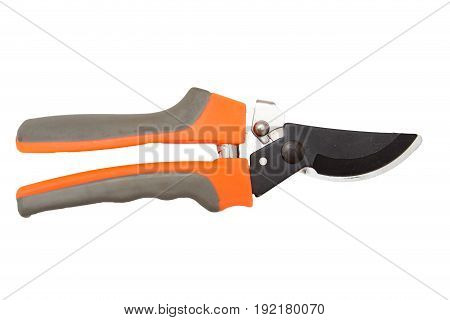 secateurs on a white background . A photo