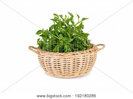 fresh watercress in bamboo basket and on white background