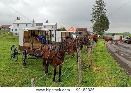 Horses tied to a pasture fence at an annual Amish benefit auction in Mifflin County Pennsylvania. Sale items include quilts tools food farm machinery and antiques.