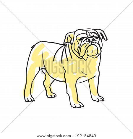English bulldog hand drawn isolated icon. Great Britain culture element, patriotic vector illustration.