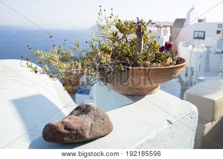 Plower Pot At Oia, Greece