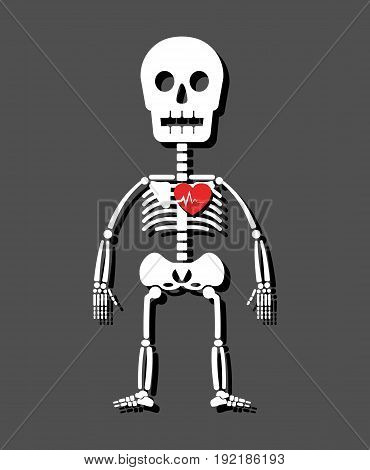 Human skeleton and heart . Cartoon style .
