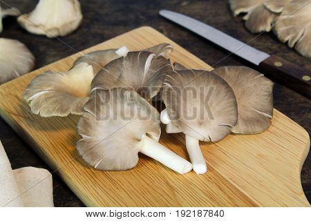 Indian Oyster, Phoenix Mushroom, Lung Oyster on wooden background
