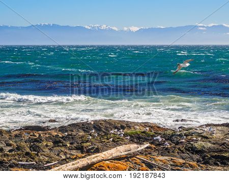 Strong winds and waves at the rocky beach with seagulls