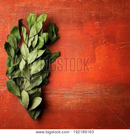 Branches Of Laurel Bay Leaves On Red