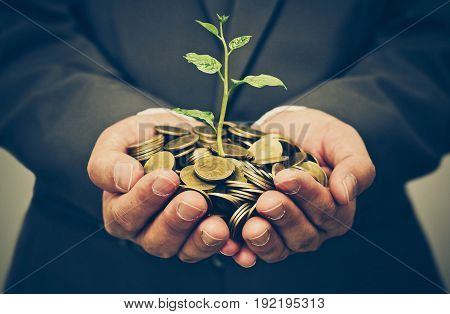 Hands of business man holding a tree growing on golden coins - business investment with csr practice