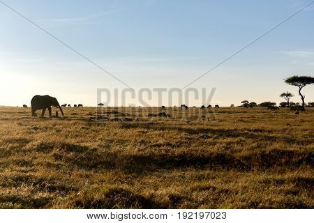 animal, nature and wildlife concept - group of different herbivore animals in maasai mara national reserve savannah at africa