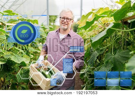 organic farming, agriculture and people concept - senior man with box harvesting crop of cucumbers at greenhouse on farm