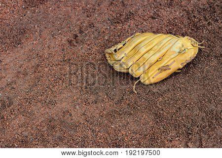 baseball gloves on the ground horizontal composition