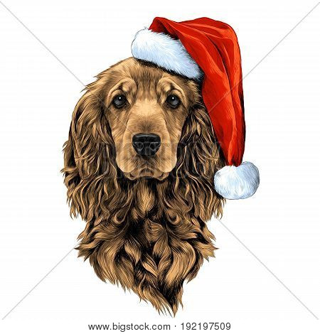 dog breed Cocker Spaniel face in a Santa hat sketch vector graphics color picture