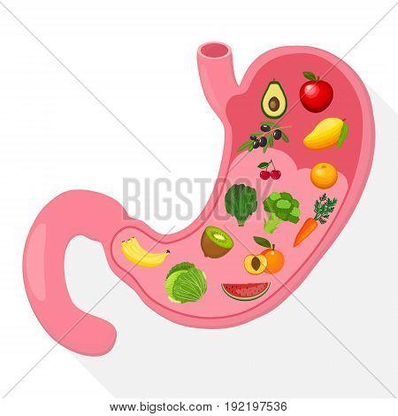 Illustration of Human Internal Stomach Anatomy. Vector illustration