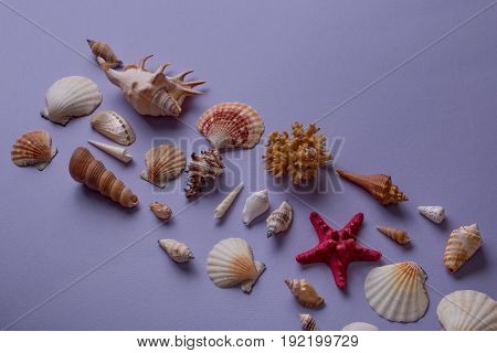 Conceptual Arrangement Of Seashells