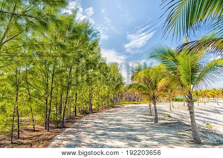 Tropical Landscape Of Palms And Trees On White Sand