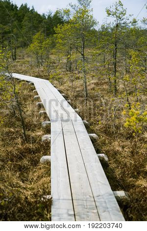 A Beautiful Wooden Footpath In A Early Spring Marsh