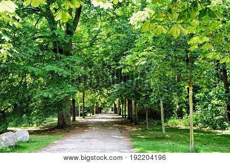 beautiful road or path way in alley with green trees and grass in summer sunny outdoor without car