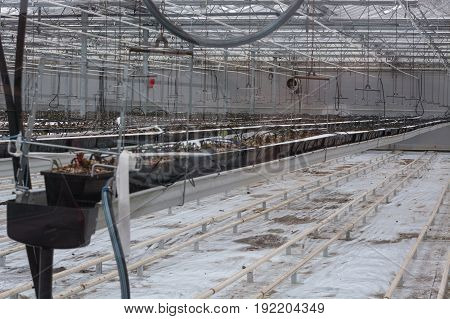 Greenhouse for cultivation and breeding of flowering plants and vegetables.