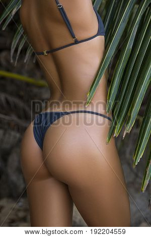 Close-up beautiful luxury slim back of a beautiful woman in a swimsuit posing Against of the palm leaves. Sexy tanned body flat stomach perfect figure. Rest on a tropical island. Sexy buttocks.