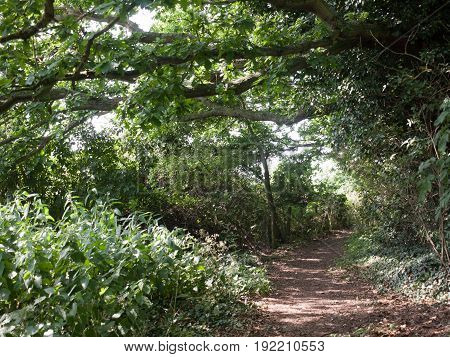 Pathway In Countryside With Plants