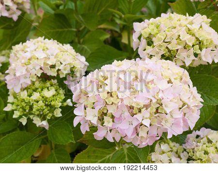 White Front Garden Flowers Lovely