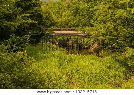 Footbridge over a small stream in a woodland area at a public park in South Korea