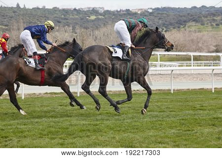 Horse race training. Competition sport. Hippodrome. Speed background