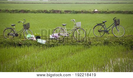Tam Coc, Ninh Binh, Vietnam - March 17, 2017: Bycicle of vietnamese farmers on the  rice field at foggy morning. Ninh Binh, Vietnam travel landscapes and destinations.