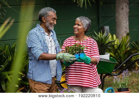 Smiling senior couple holding plant together in backyard