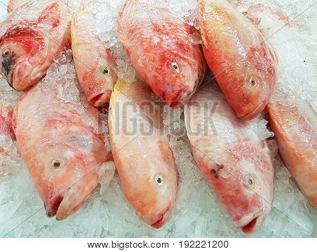 red Nile tilapia on ice background on supermarket in Thailand