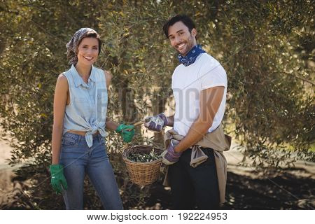 Portrait of smiling young couple holding olives in basket at farm
