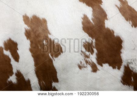 cowhide with abstract red and white pattern on side of cow