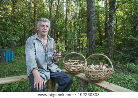 In summer in a birch forest a man with two baskets of mushrooms is sitting.