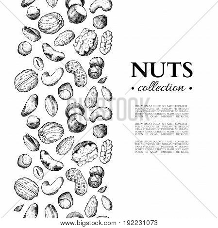 Nuts vector vintage border illustration. Hand drawn engraved food objects. Great for label, banner, flyer, card, template, brochure, business promote